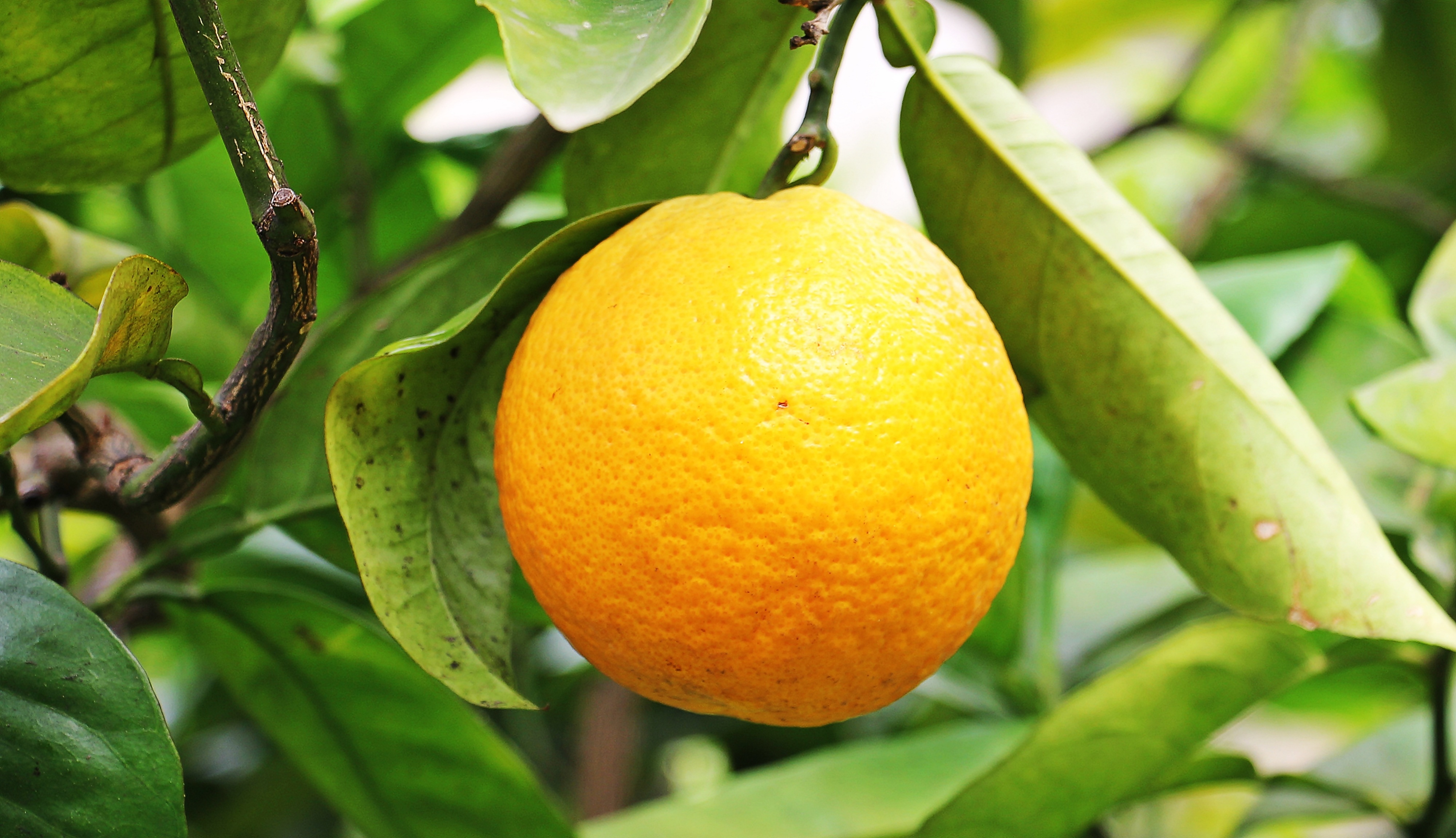 A quoi sert la vitamine c guide complet top 17 aliments riches en vitamine c therapeutes - A quoi sert le magnesium ...