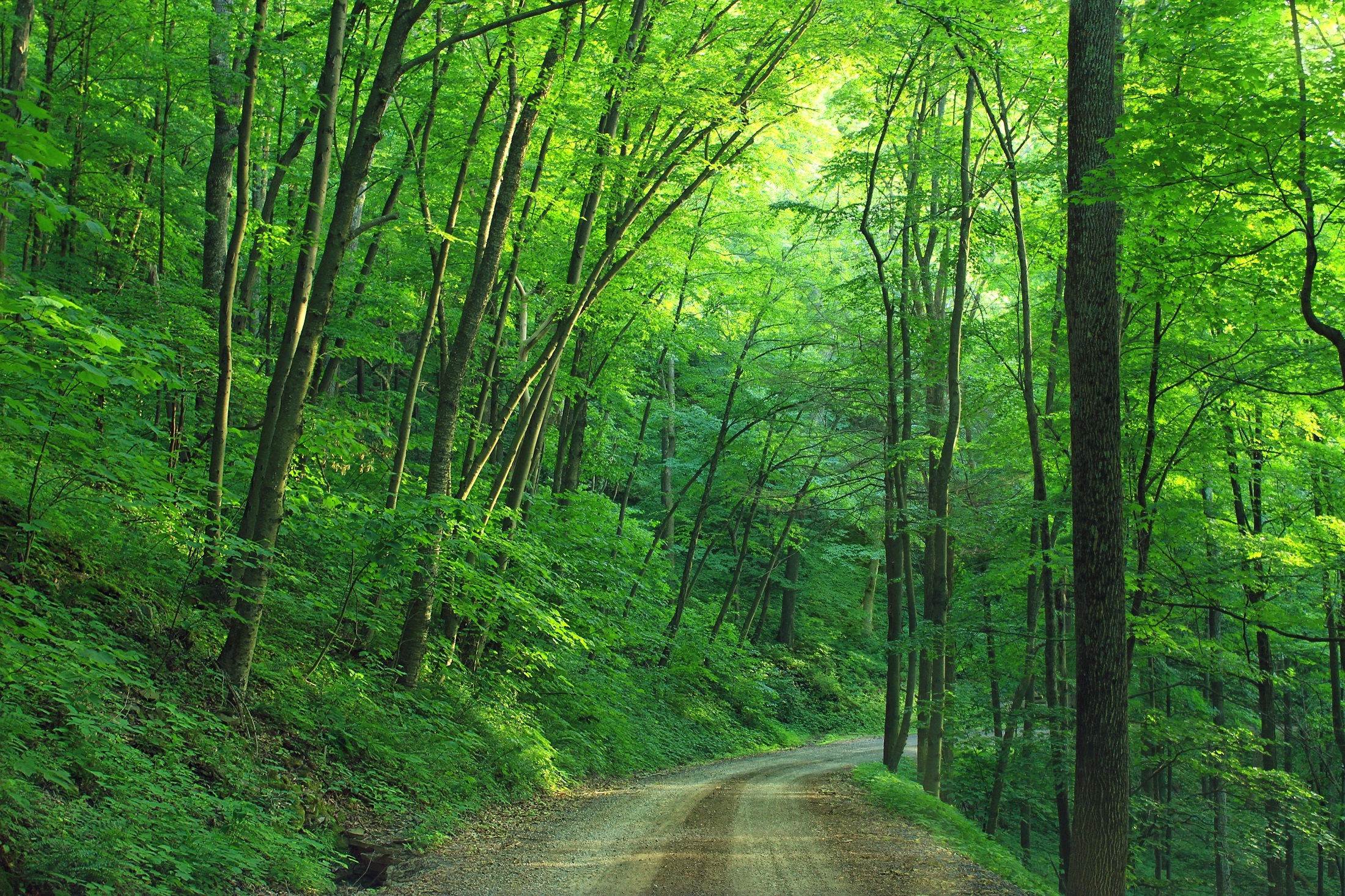green tree forest - photo #13