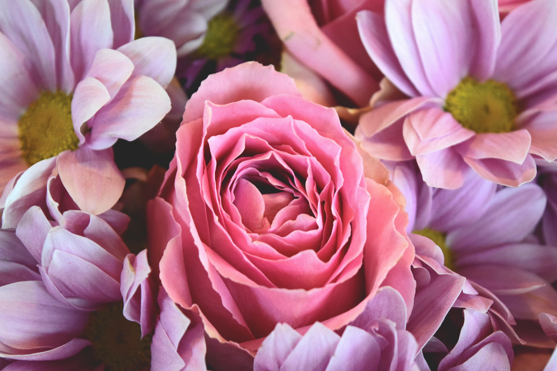 Rose flowers free stock photos download (11,796 Free stock photos ...