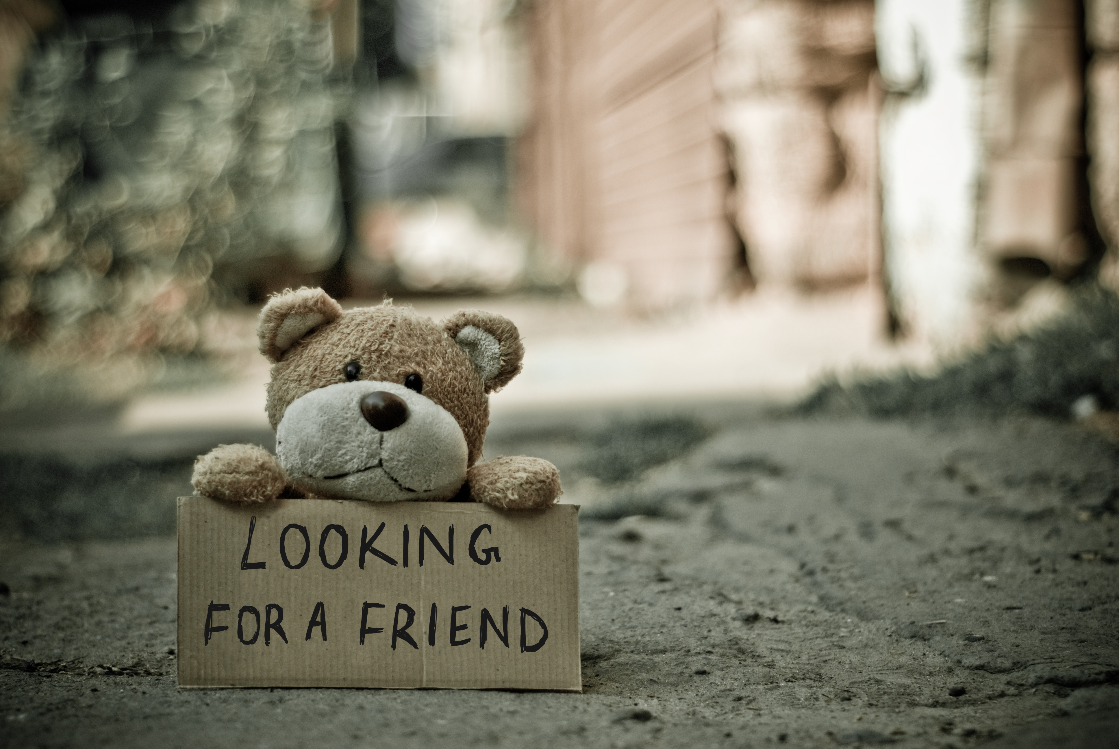 looking for a friend bear free stock photo