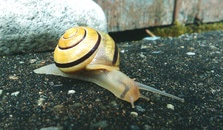 Brown and Beige Snail