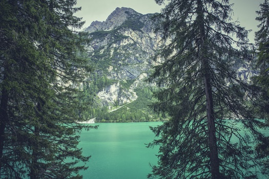 Green Tall Trees Near Body of Water