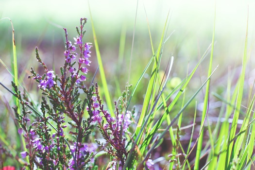 Free stock photo of nature, meadow, plant, flower