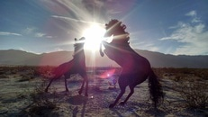 Silhouettes of 2 Horse Near Mountain during Daytime