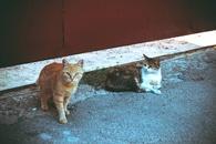 Orange Tabby Cat Beside Brown Tabby Cat in Gray Concrete Road