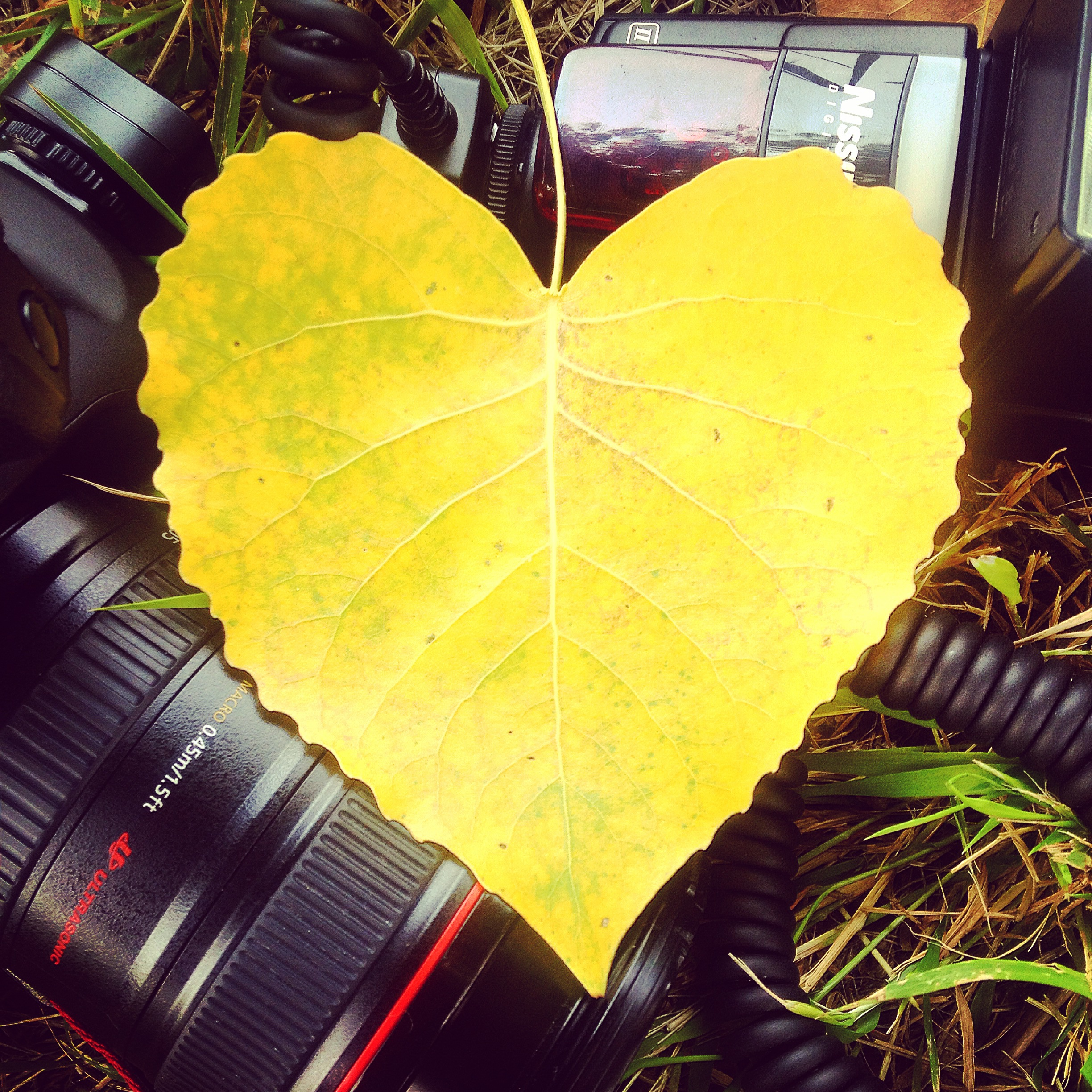 love-heart-yellow-photography.jpg (2448×2448)