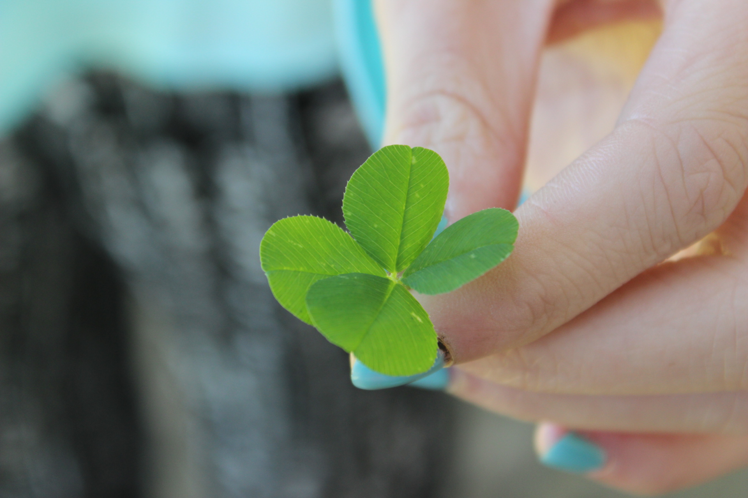 free stock photo of 4 leaf clover four leaf clover green