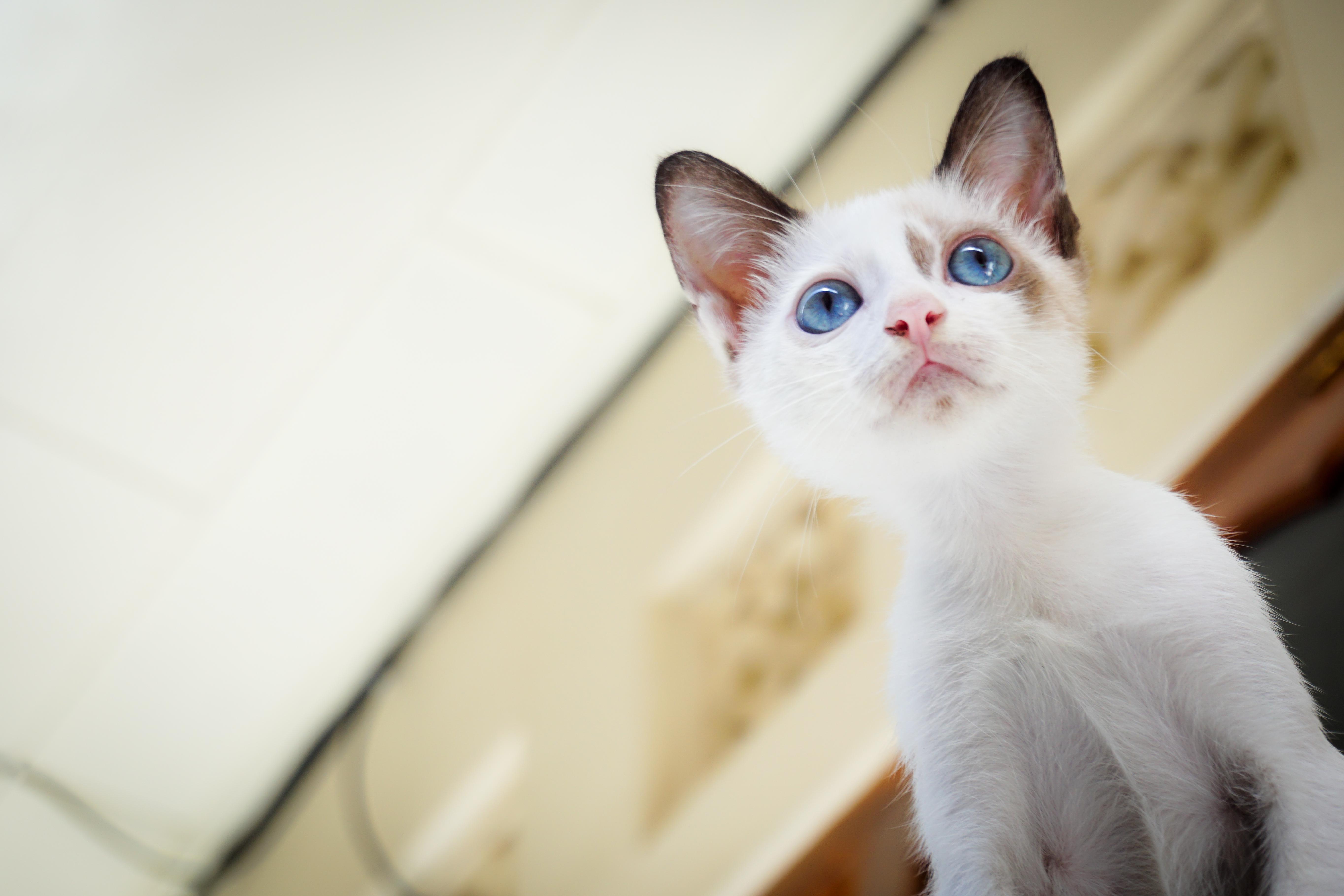 calicivirus in cats treatment