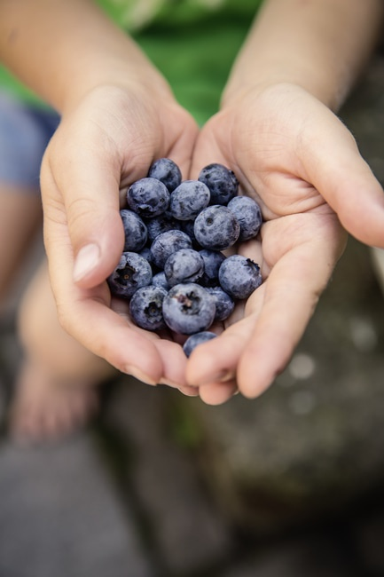 Blueberries on Hand Shallow Focus Photography