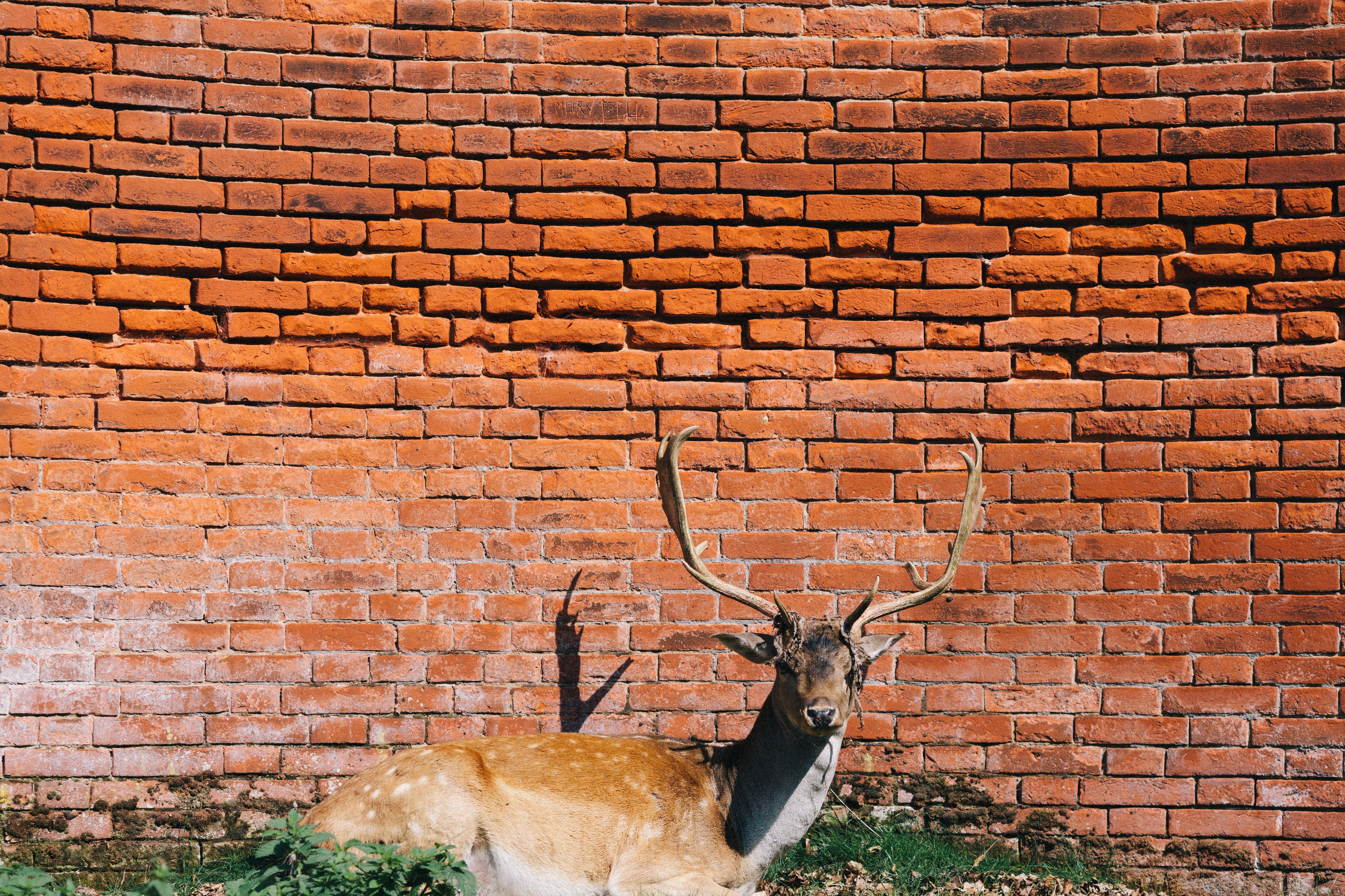 Free Stock Photo Of Animal Antlers Bricks