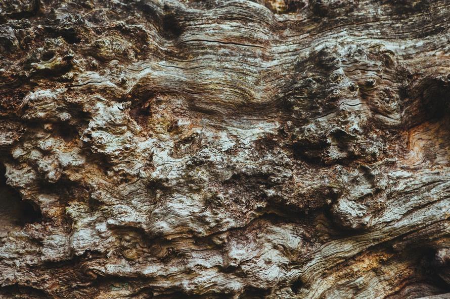 free stock photo of wood tree brown