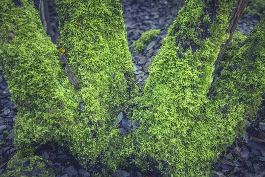 Free stock photo of nature, moss, trunk, plant