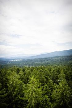 Free stock photo of wood, landscape, mountains, nature