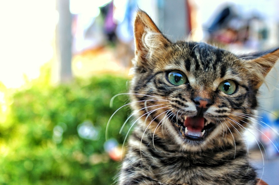 5 Reasons Why Cats Rule and Dogs Drool!