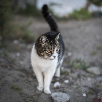 White and Grey Cat Standing on Grey Sand during Daytime