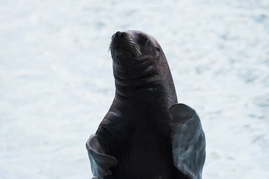 Free stock photo of seal, seals