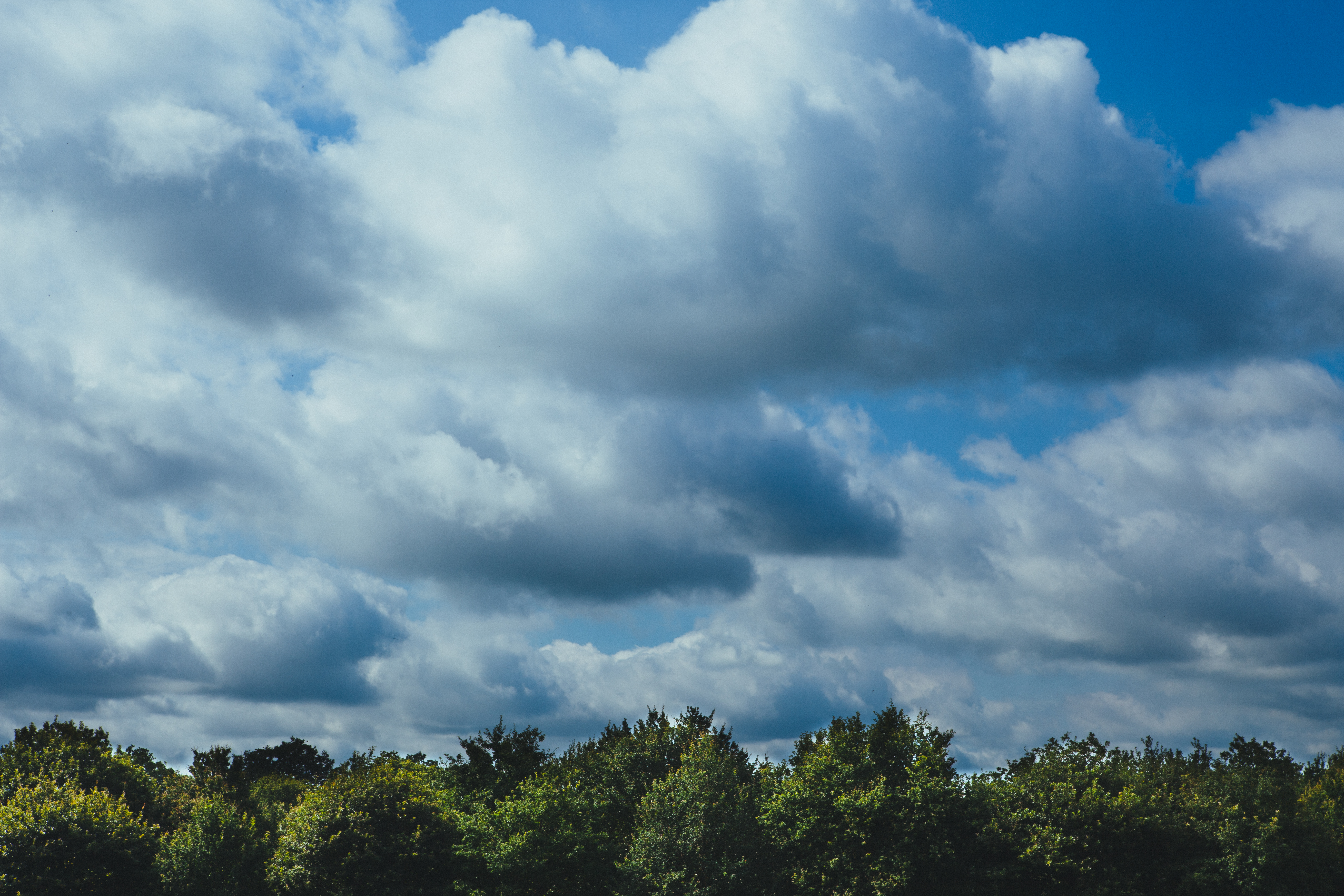 Free Stock Photo Of Clouds Cloudy Forest