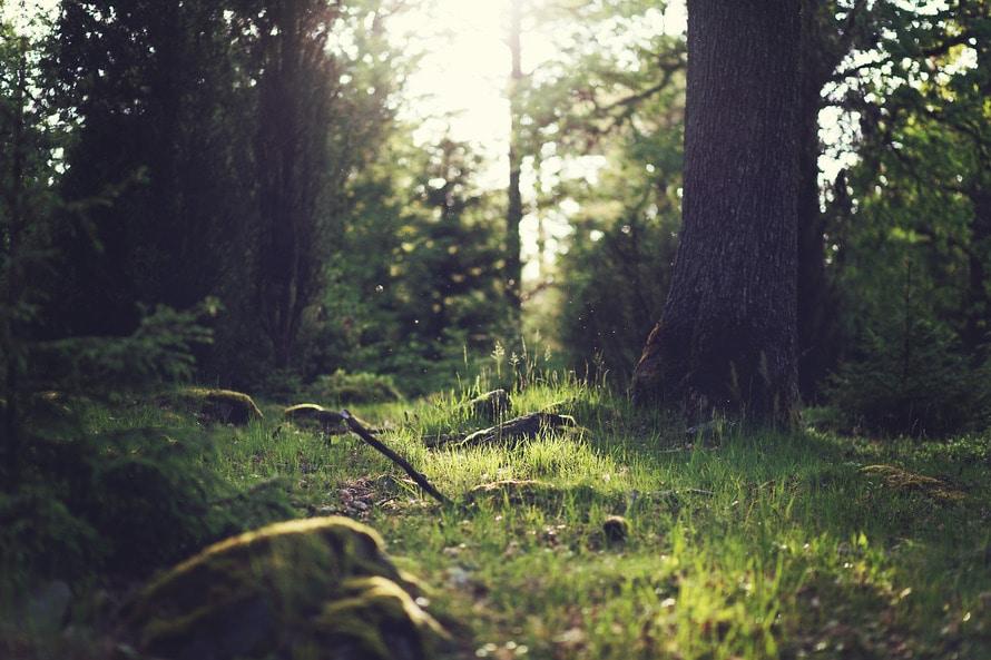 wood, nature, sunny
