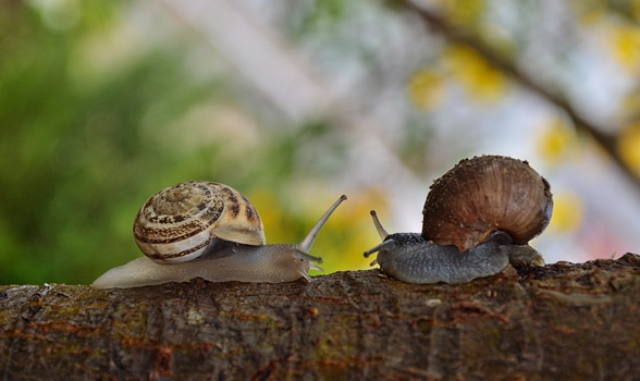 2 Snail Facing Each Other
