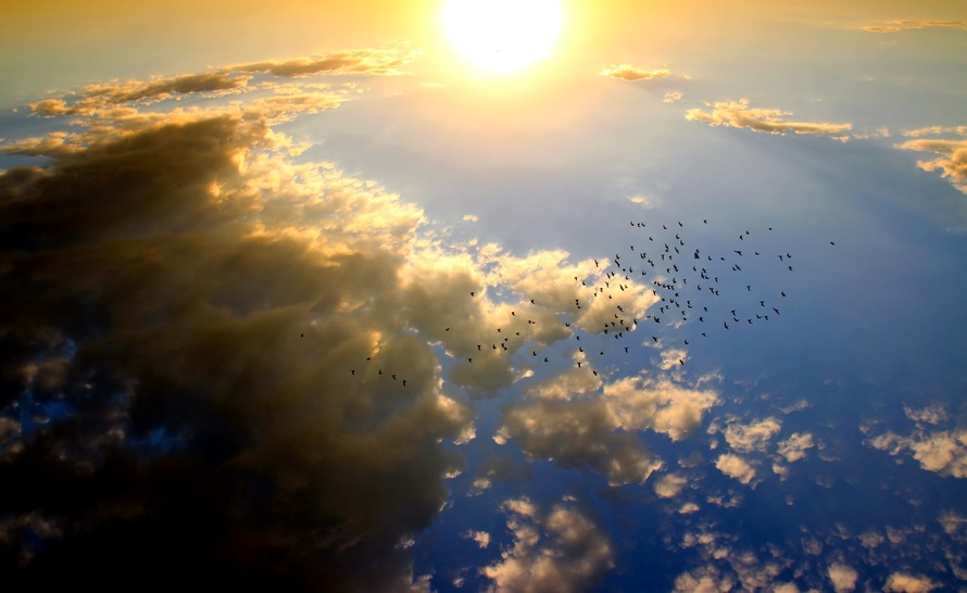 Birds Flying in the Sky during Daytime