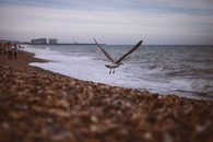 sea, bird, beach