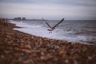 sea, bird, beach