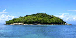 Island Covered With Green Trees Under the Clear Skies