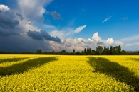Green Field Under White and Blue Clouds during Daytime