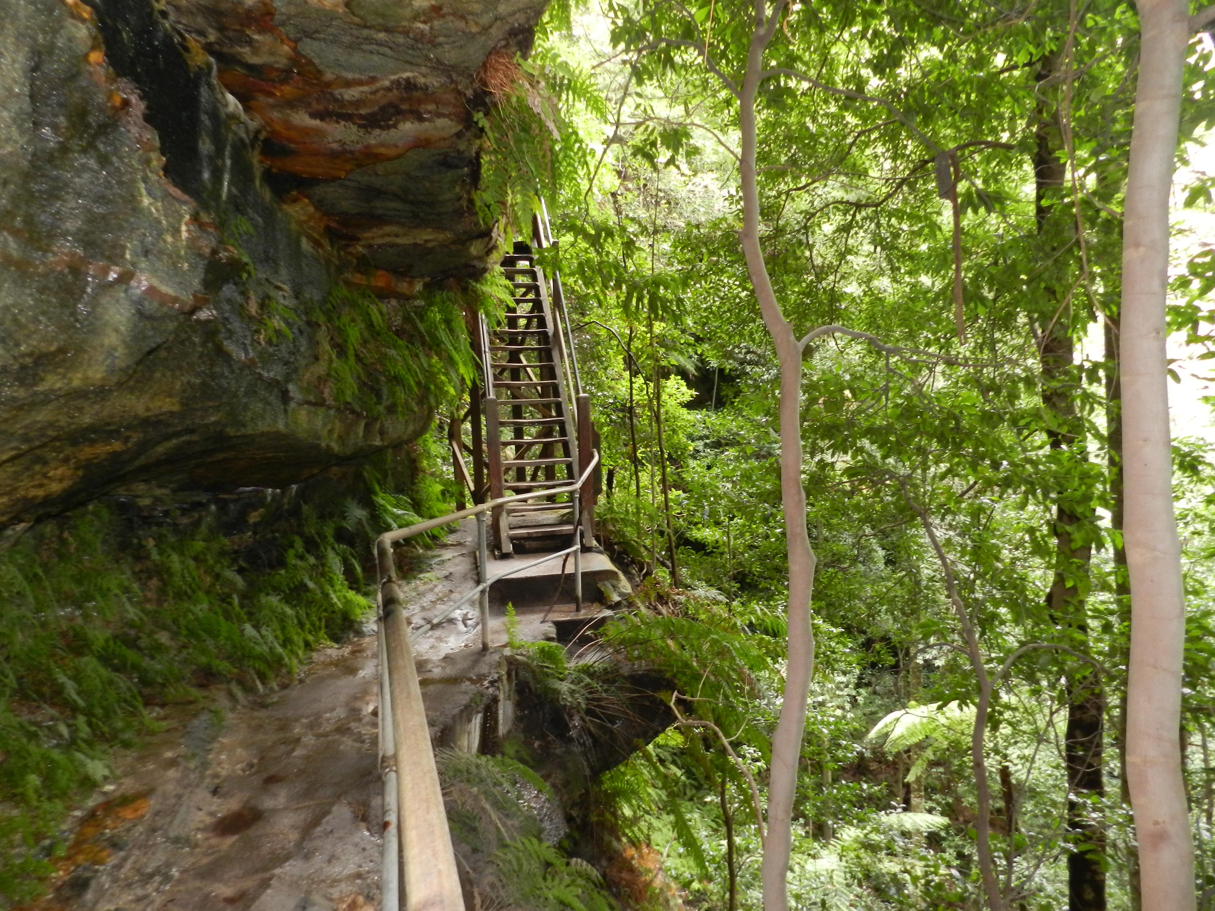 Stock Charts Australia: Free stock photo of australia hiking rainforest,Chart