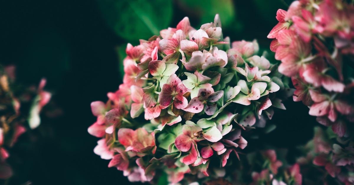 Free stock photo of flowers plant for Bouquet de fleurs homme