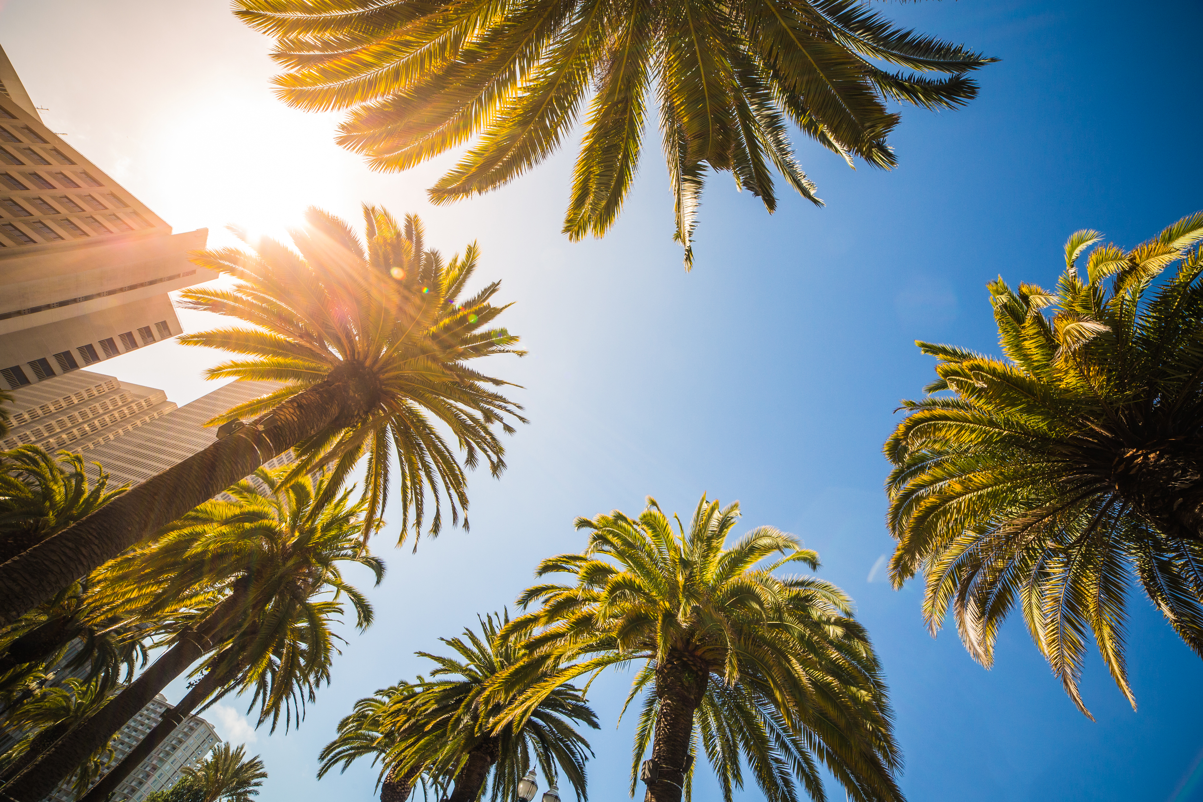 Free stock photos of palm trees pexels green leaf palm trees near white structure voltagebd Images