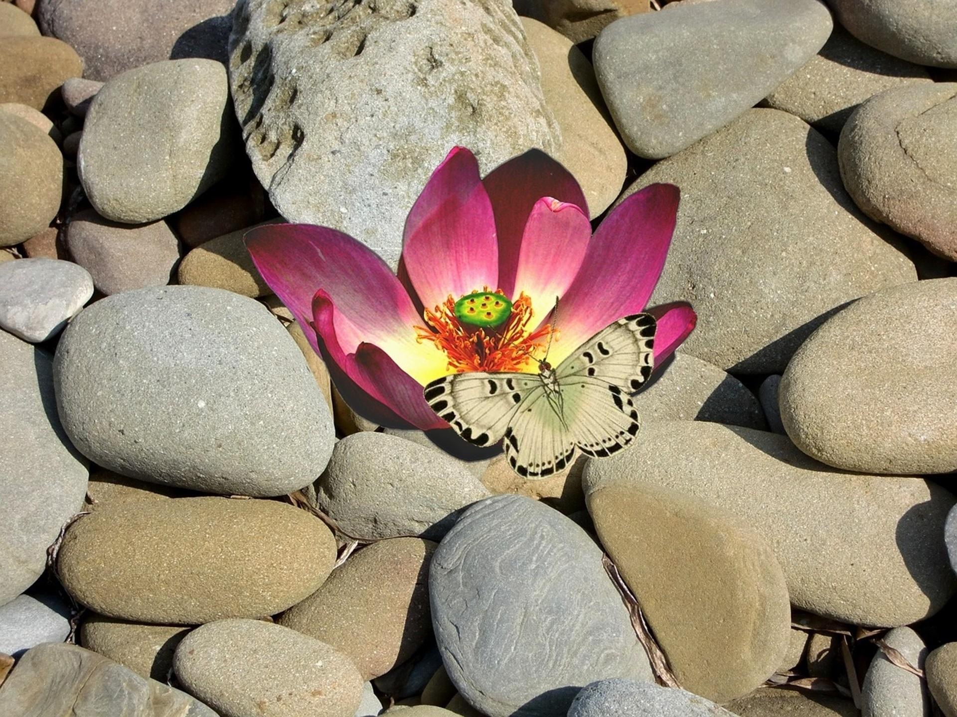 Цветы камни фото 7