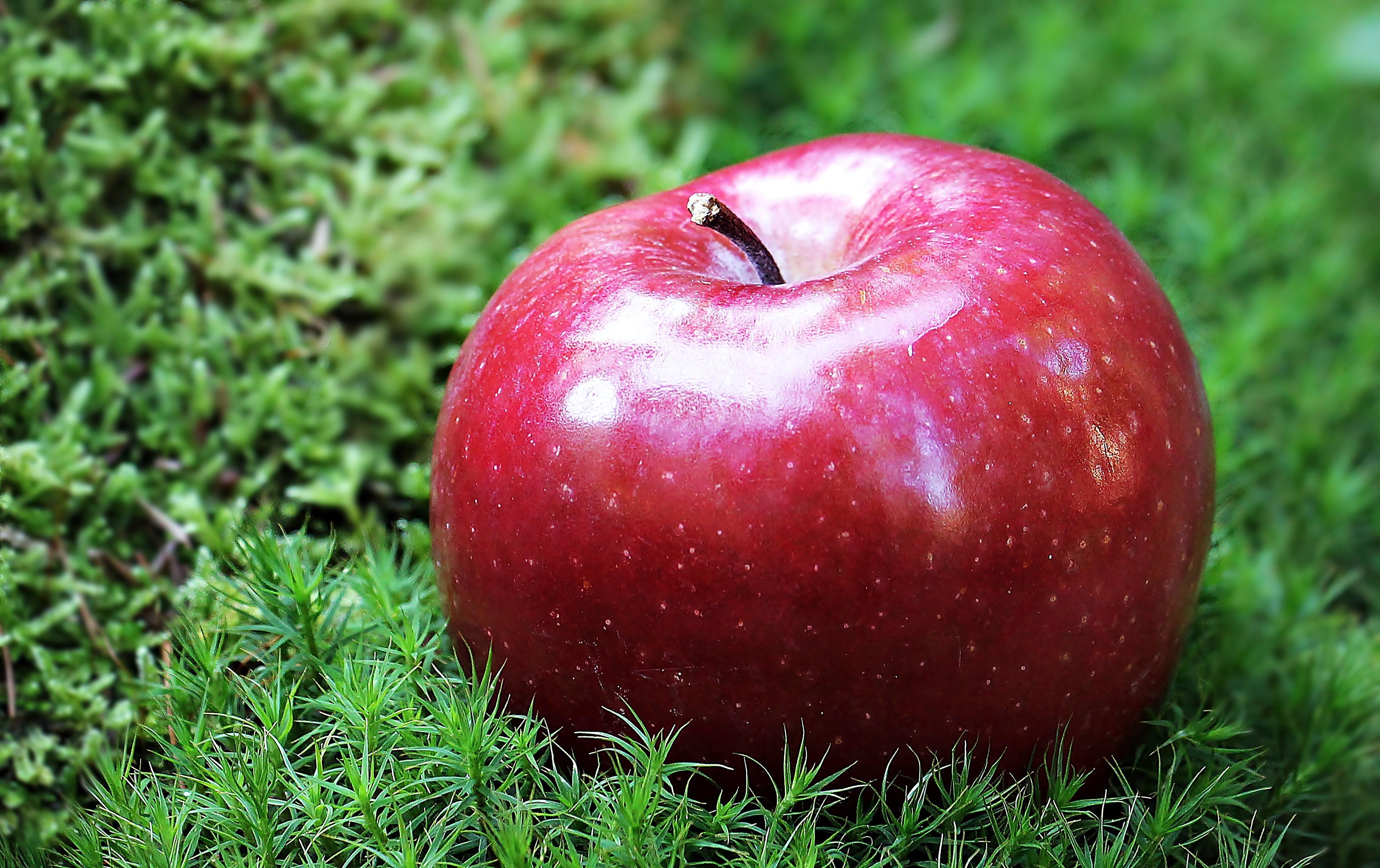 apple fruit background grass - photo #20