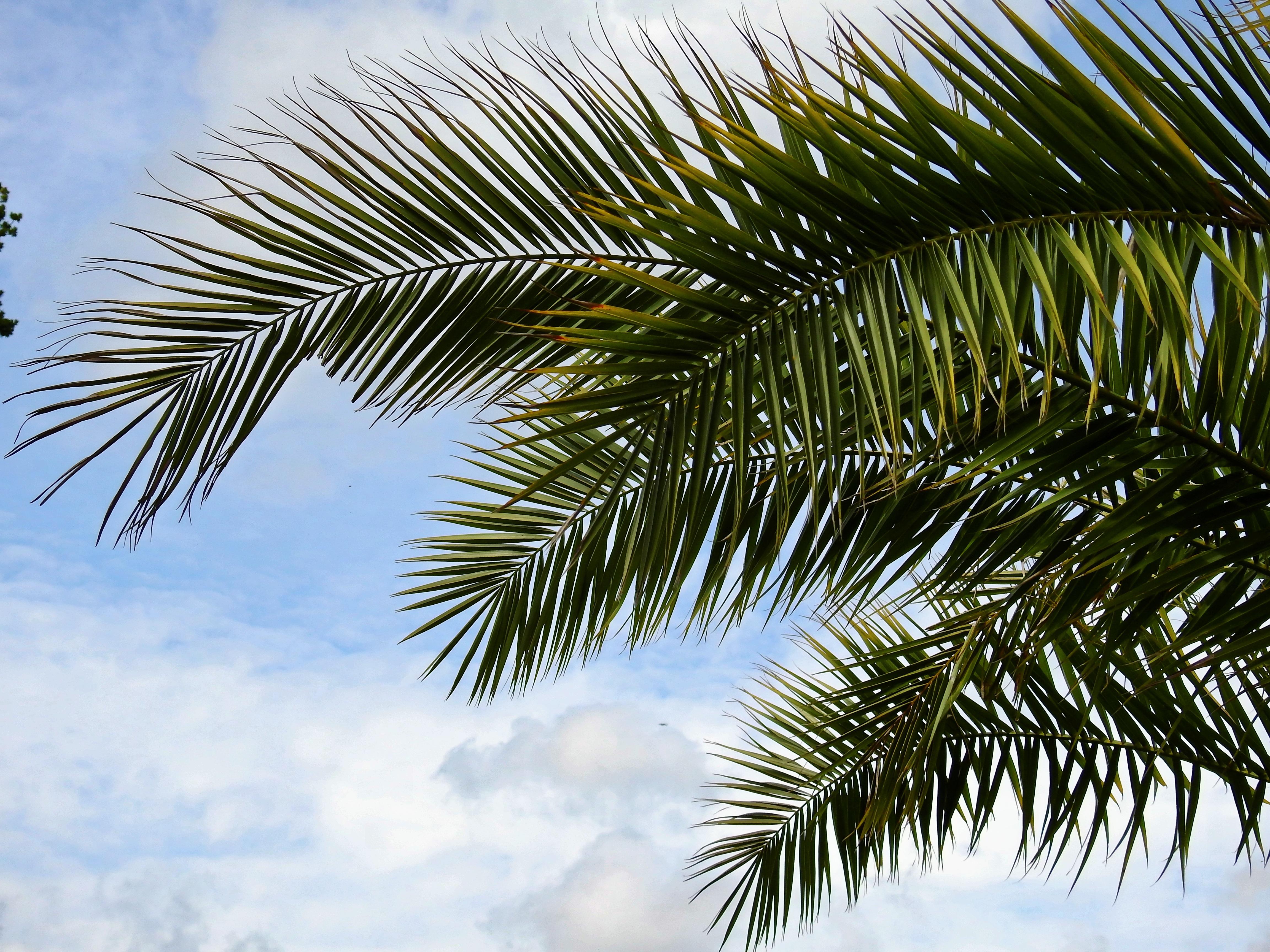 free stock photos of palm tree pexels