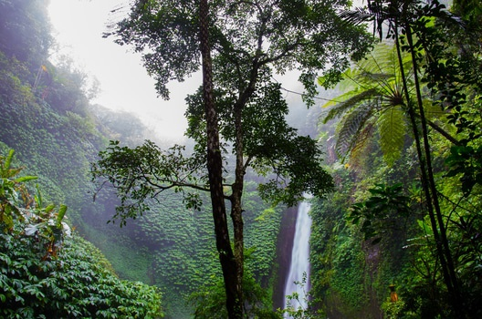 Free stock photo of nature, forest, waterfall, jungle