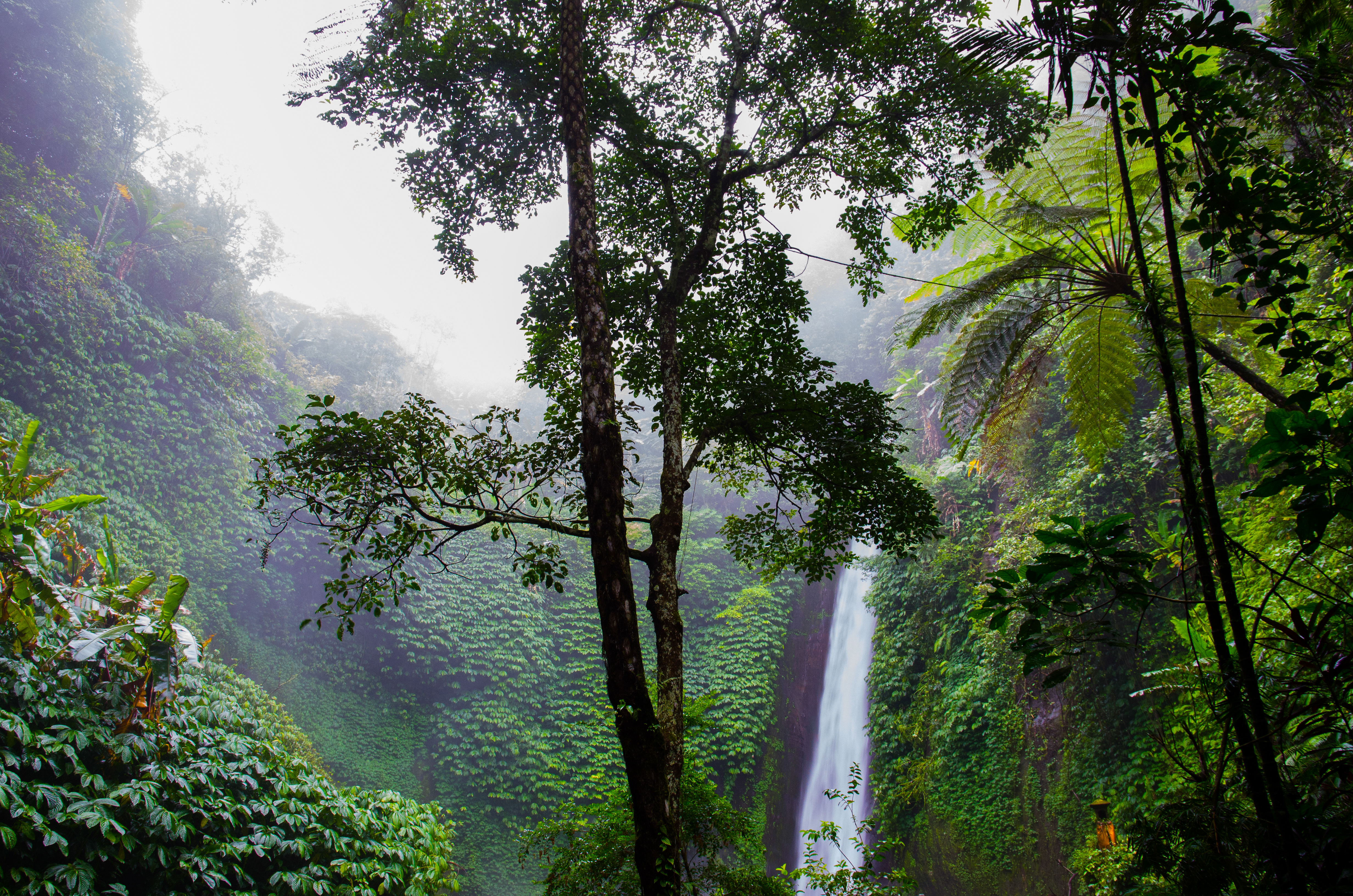 [Image: nature-forest-waterfall-jungle.jpg]