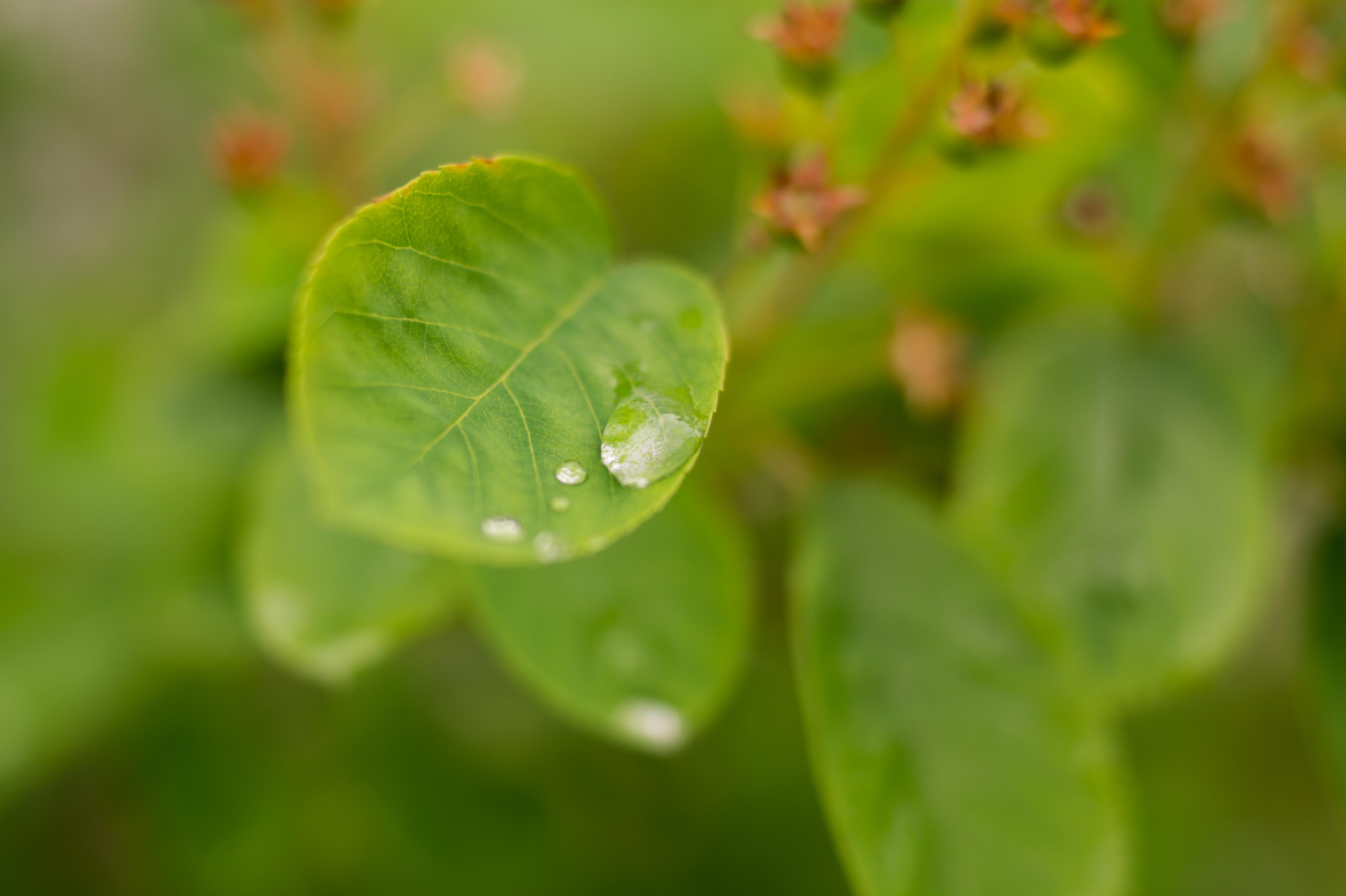 free stock photo of drop of water leaf rain