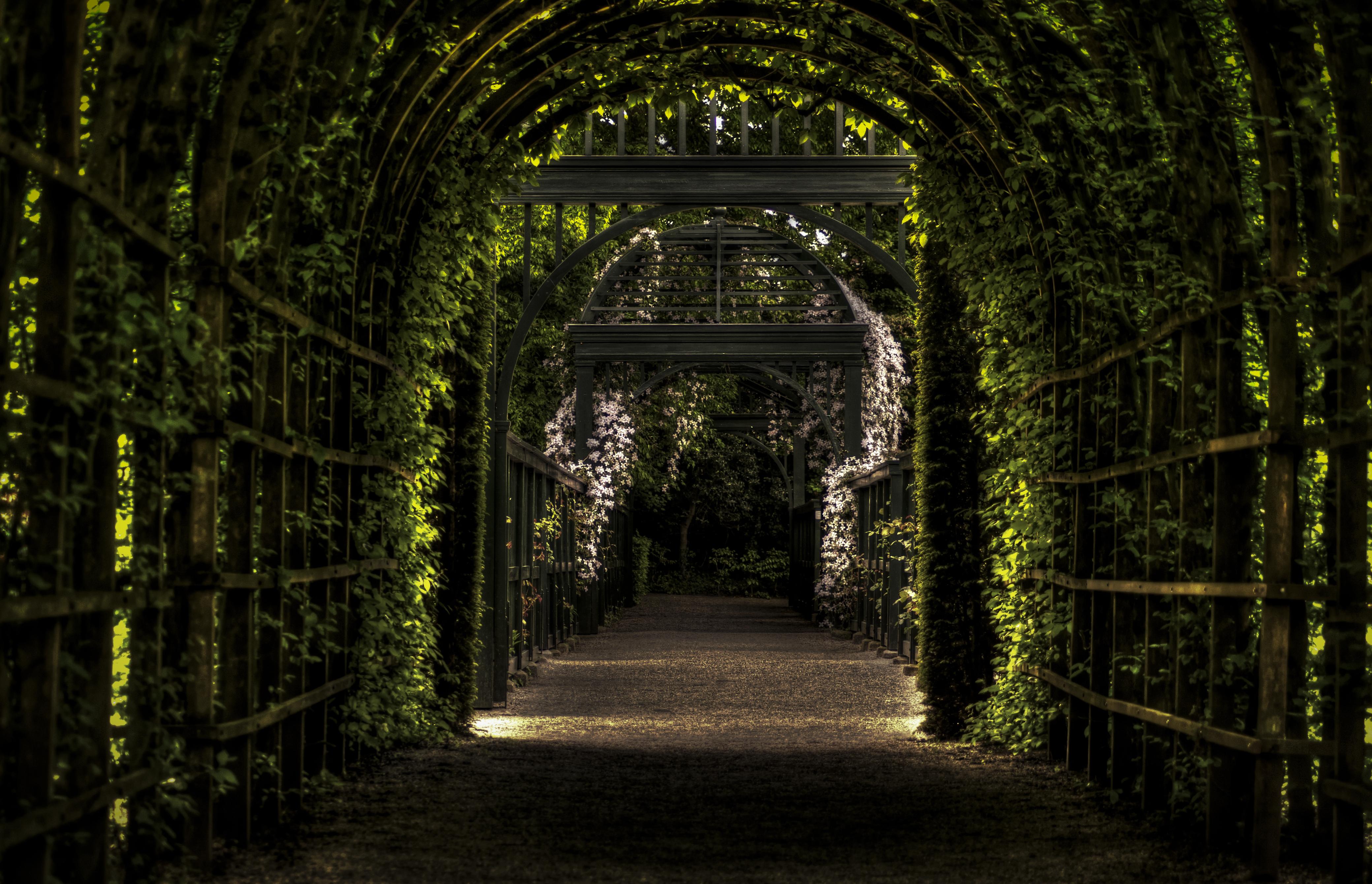 Free stock photo of garden - Free Download