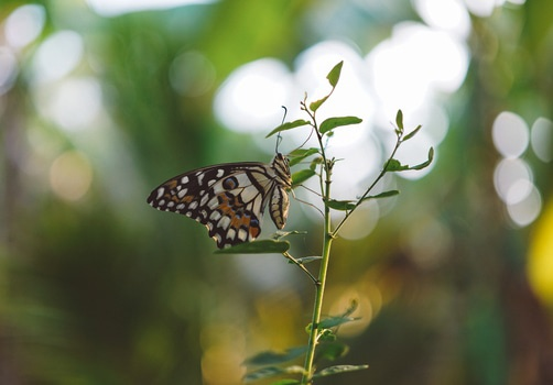 Brown Black White Butterfly on a Green Leaf Plant Close Up Photography