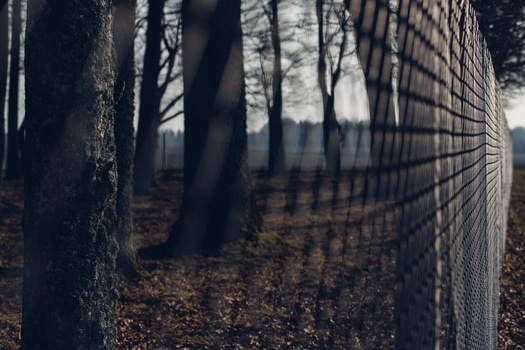 Chain Link Fence With Trees in Background during Twilight