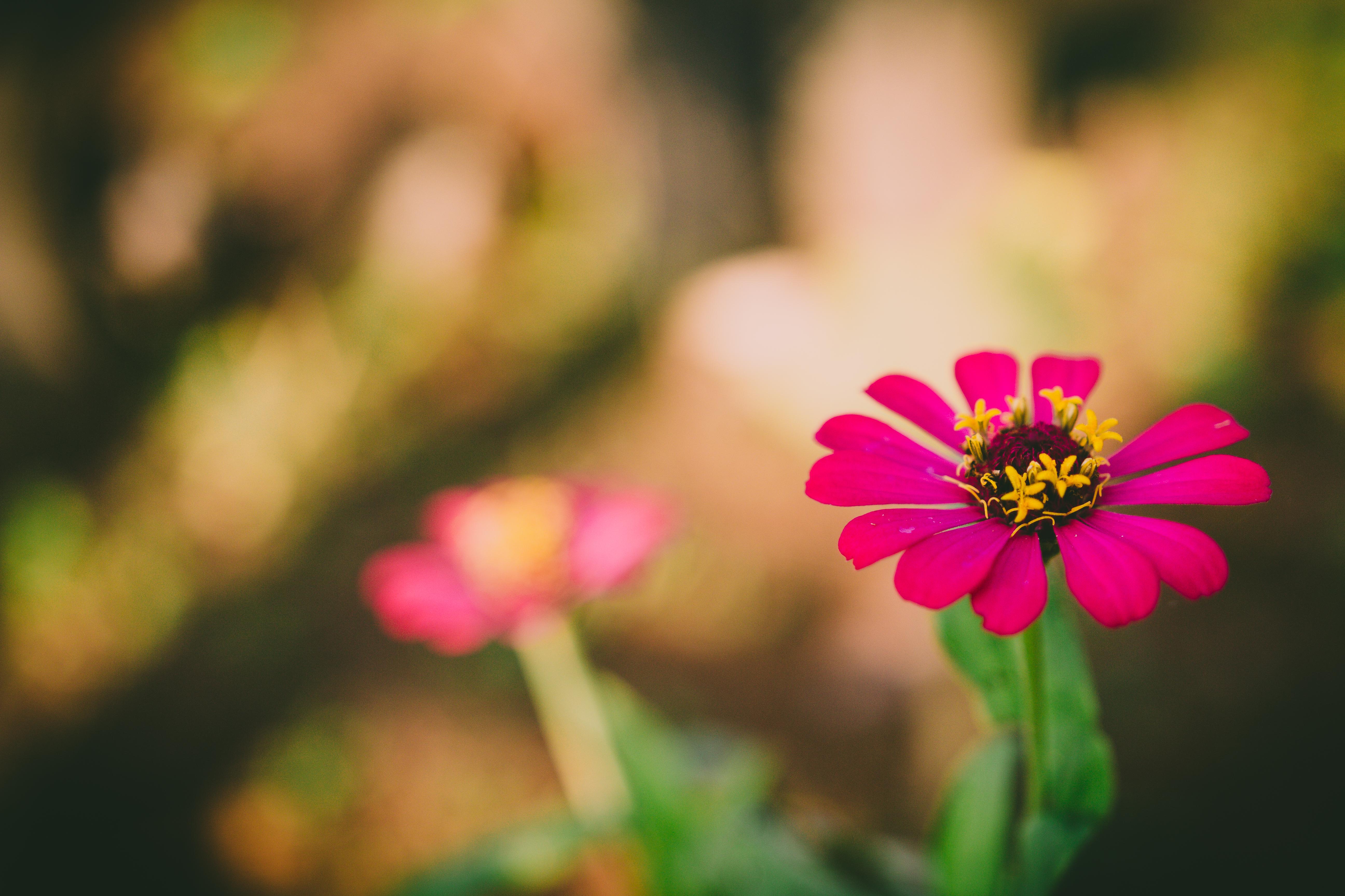Фокус с цветком