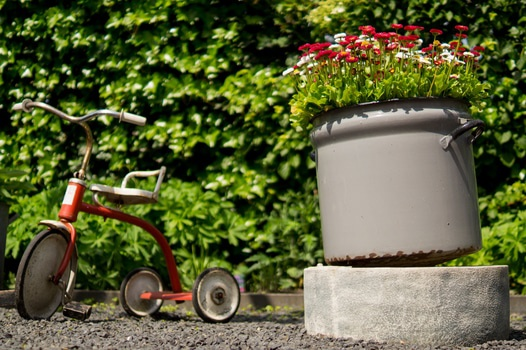 Free stock photo of flowers, garden, playing, pot