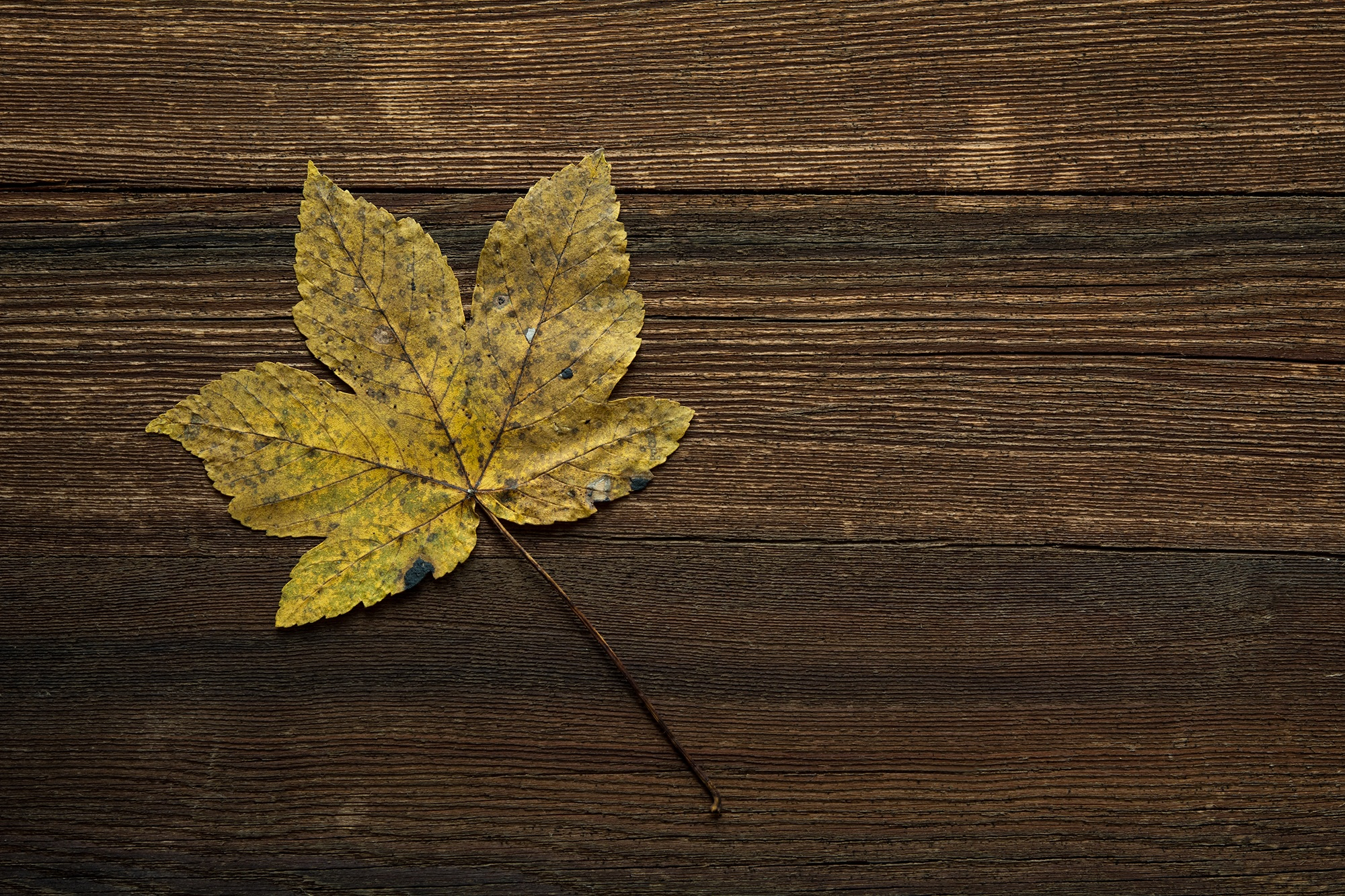 Free stock photo of hd wallpaper leaf table - Wallpaper images ...