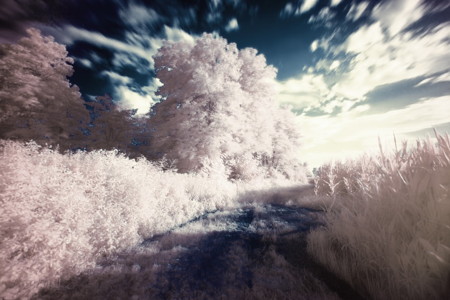 free stock photo of dream filter infrared