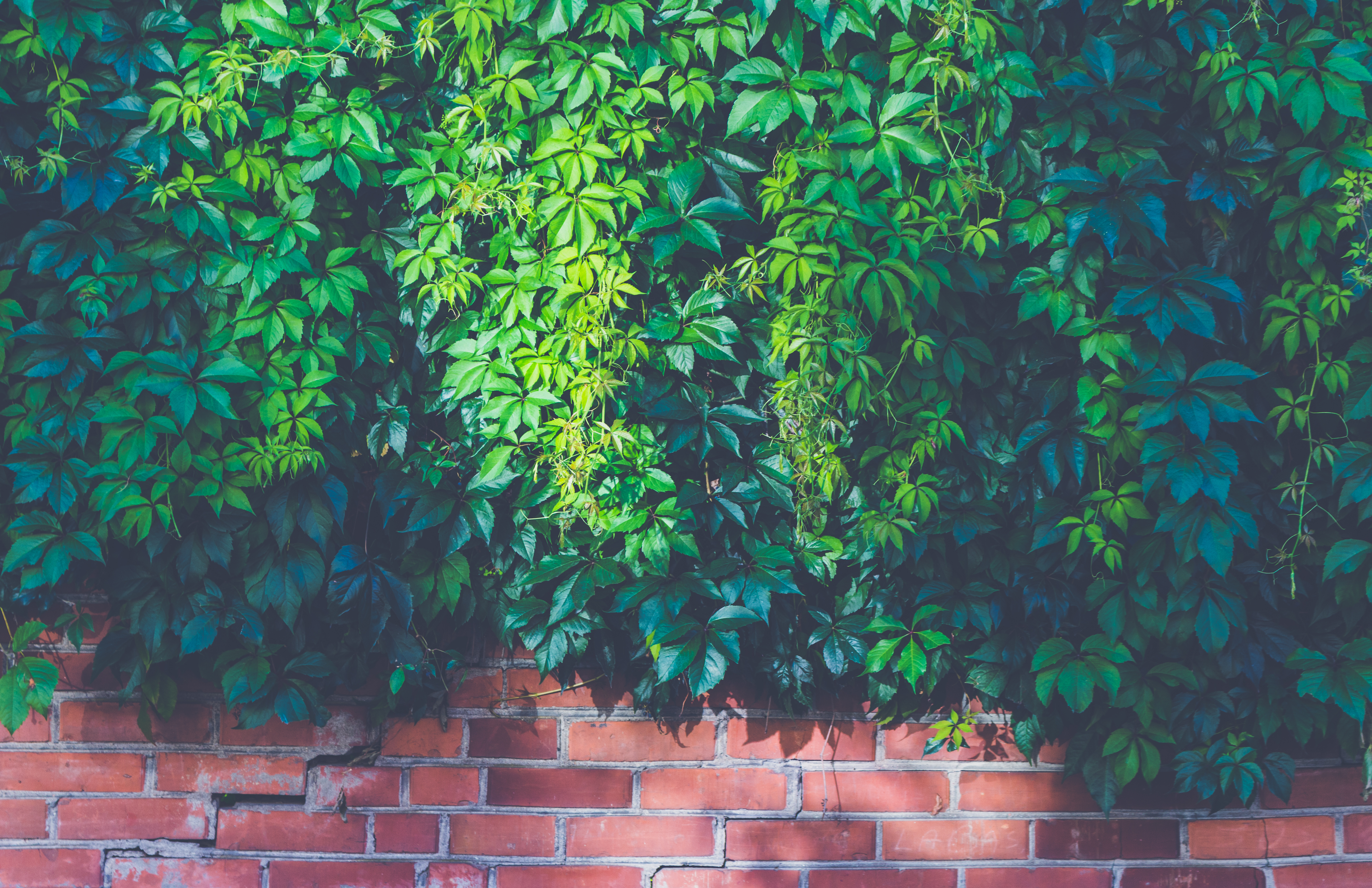 Wall Photos green outdoor plants on brown brick wall · free stock photo