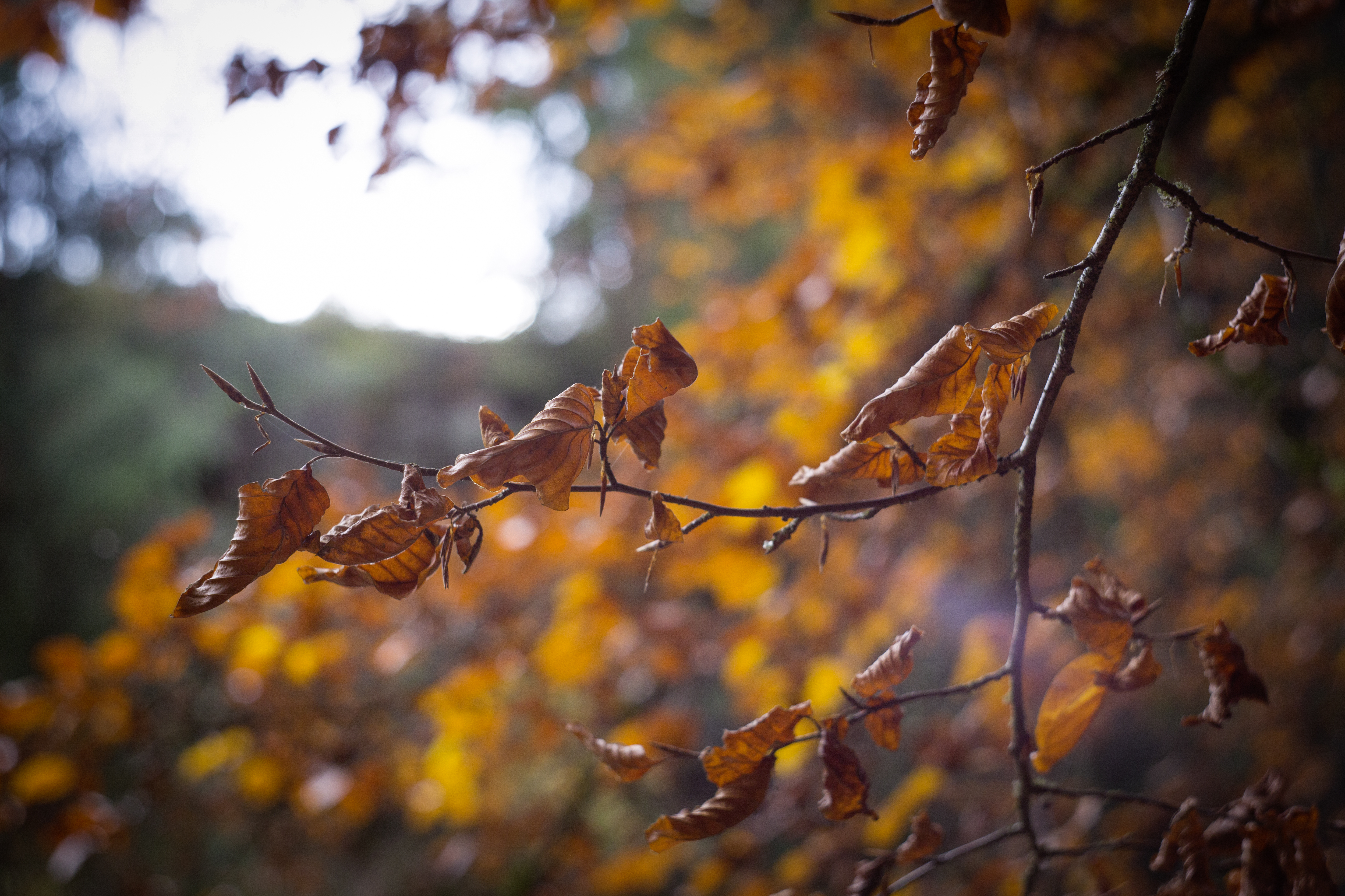 selective focus of withered leaves of tree free stock photo
