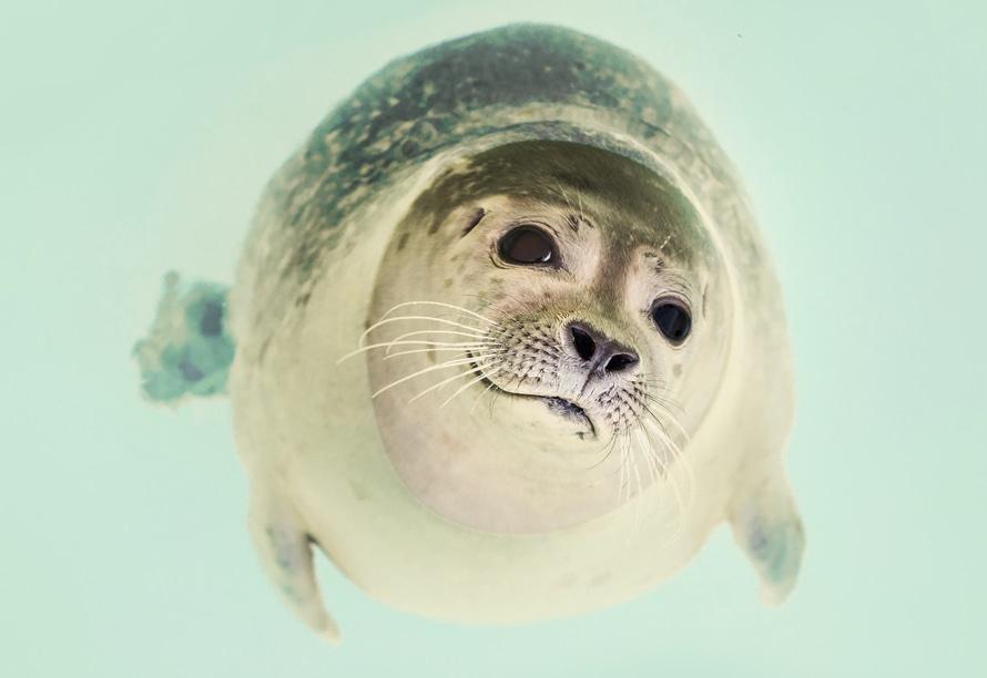 sea-animal-dog-zoo-23087-large.jpg