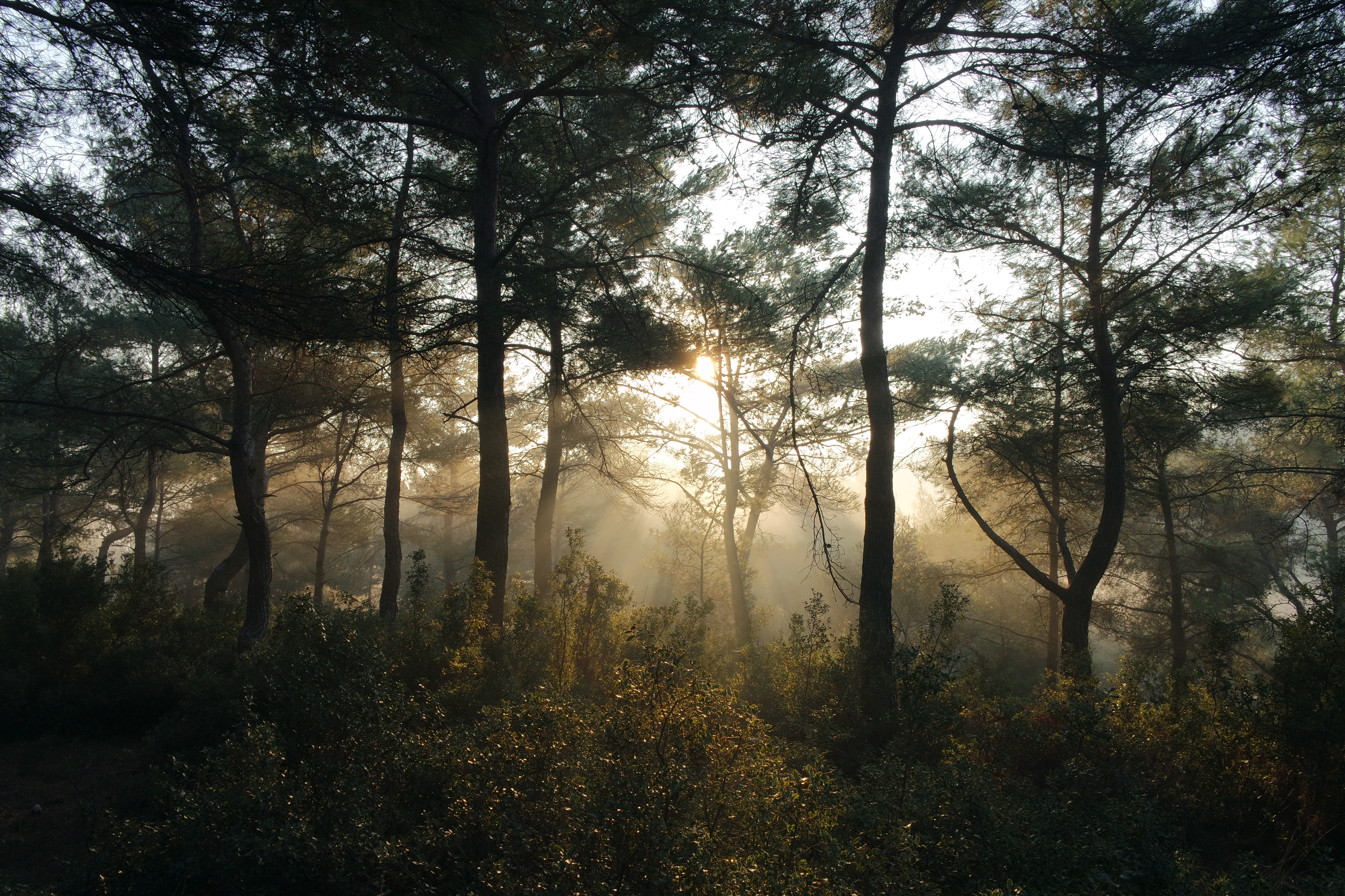 Nature Images 2mb: Free Stock Photo Of Bushes, Forest, Nature