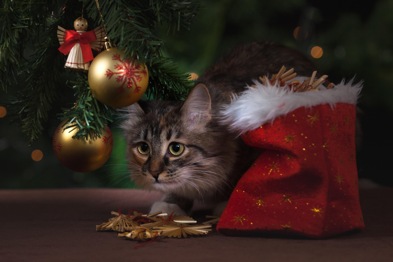Free stock photos of christmas cat · Pexels