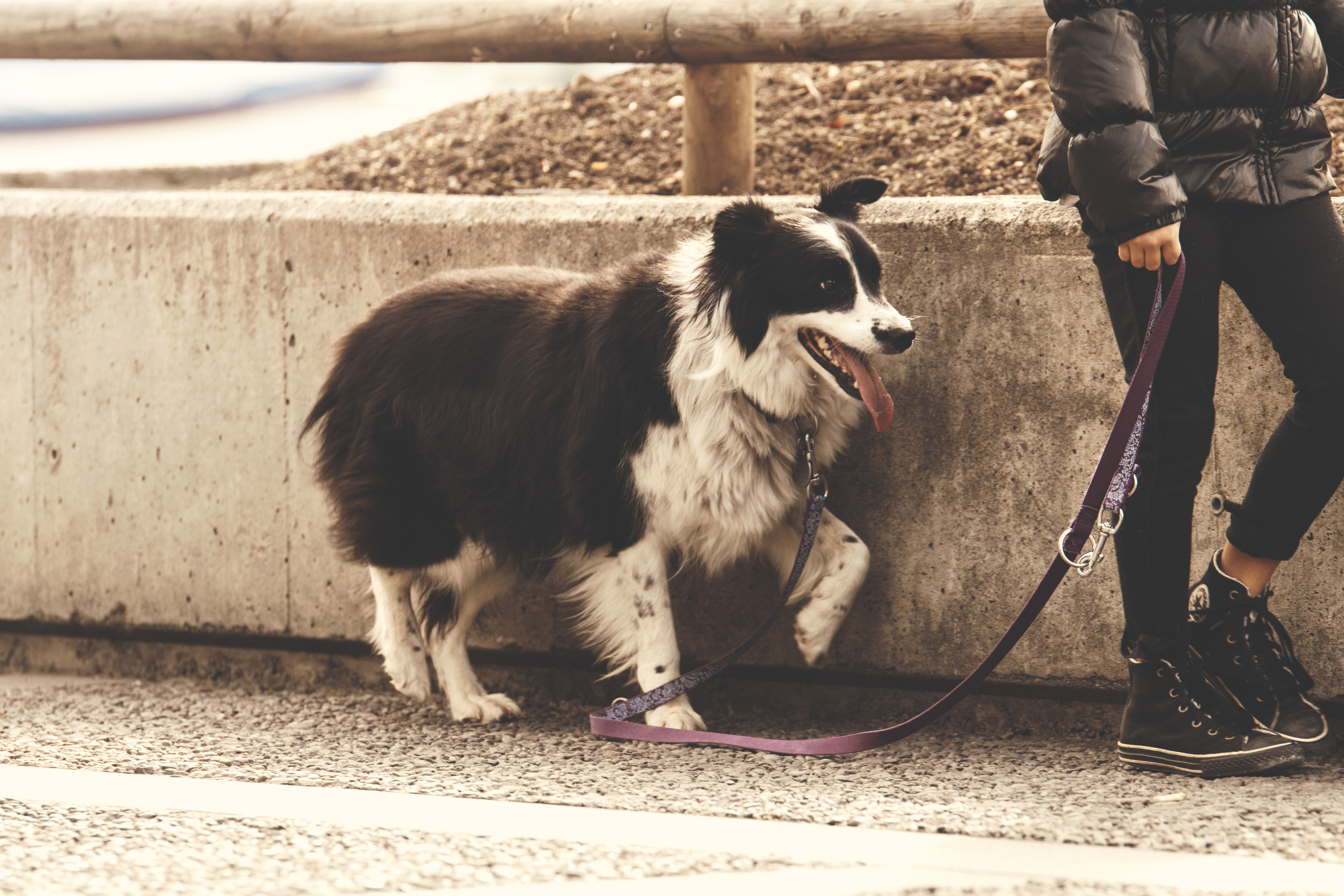 Pet Shop Sustentável
